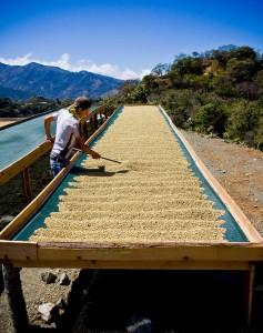 Costa Rica Micro Mill coffee beds direct trade Fratello