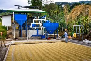 micro mill coffee direct trade costa rica
