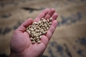 parchment coffee sun dried direct trade fratello