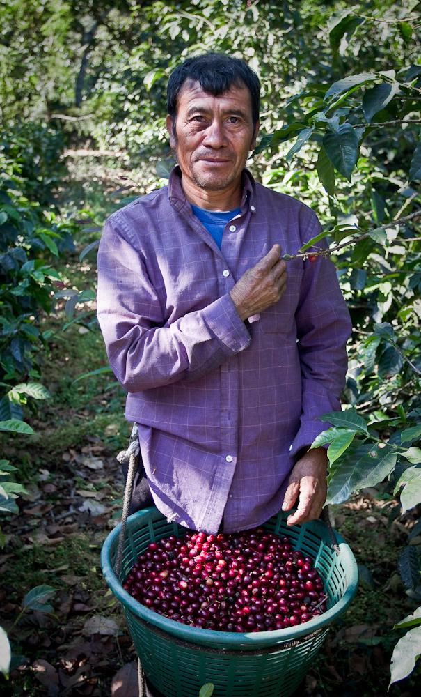 Guatemala coffee producer harvester direct trade fratello