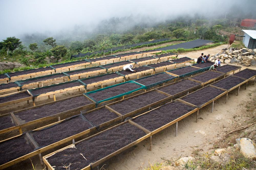 African drying beds Finca Los Pirineos El Salvador Direct Trade Fratello