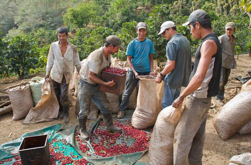 Miguel Rojas harvesters