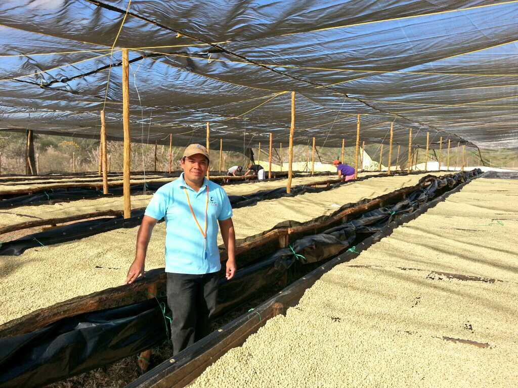 raised african drying beds